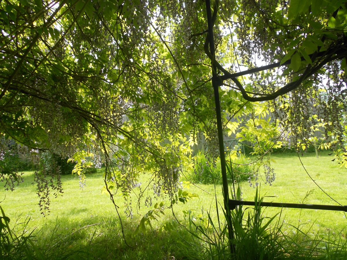 View through the trees at the garden.