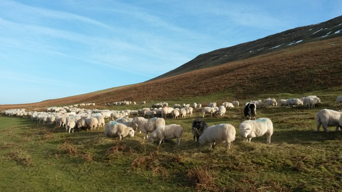 The Brecon Beacons and lots of sheep.