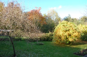 The grounds at Rose Cottage.