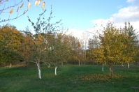 The orchard in autumn.