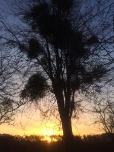 herefordshire sunset